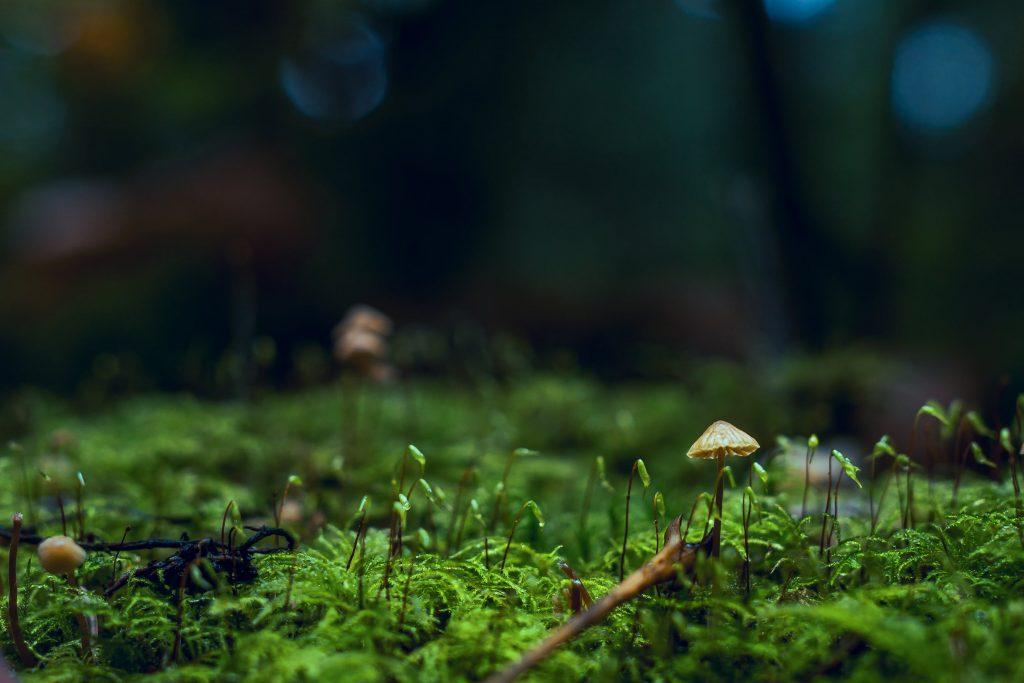 Low growing moss