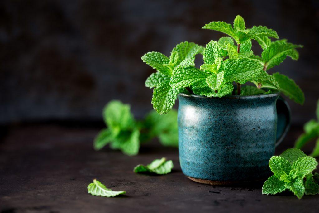 5 Best Mint Seeds For Indoor Vegetable Garden