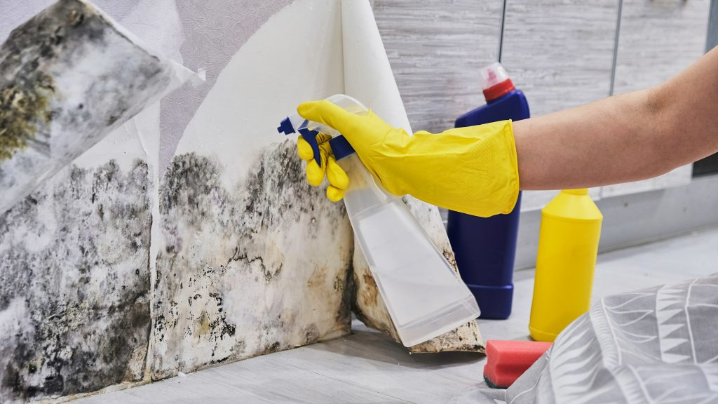 Prevent and Remove Mold in your Storage Containers