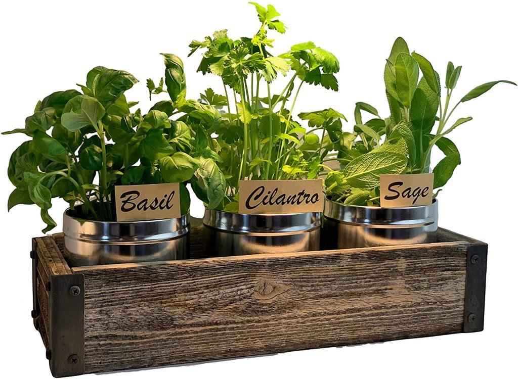 Barnwood Grow Kit