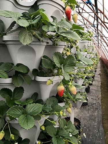 Five-Tier Strawberry and Herb Garden Planter