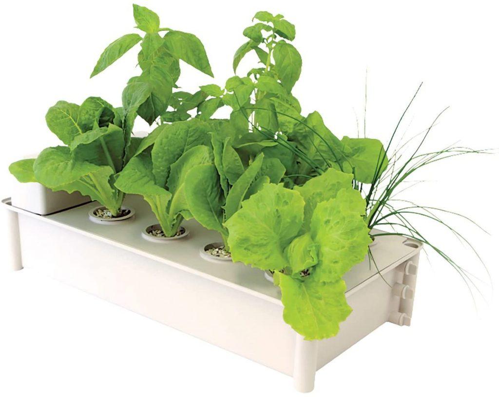 Hydrofram Hydroponic Salad Garden Box Kit