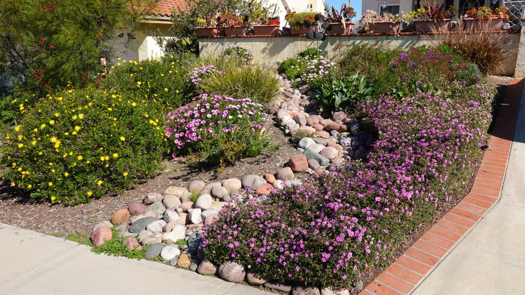 Trockenheitstolerante Pflanzen im Garten