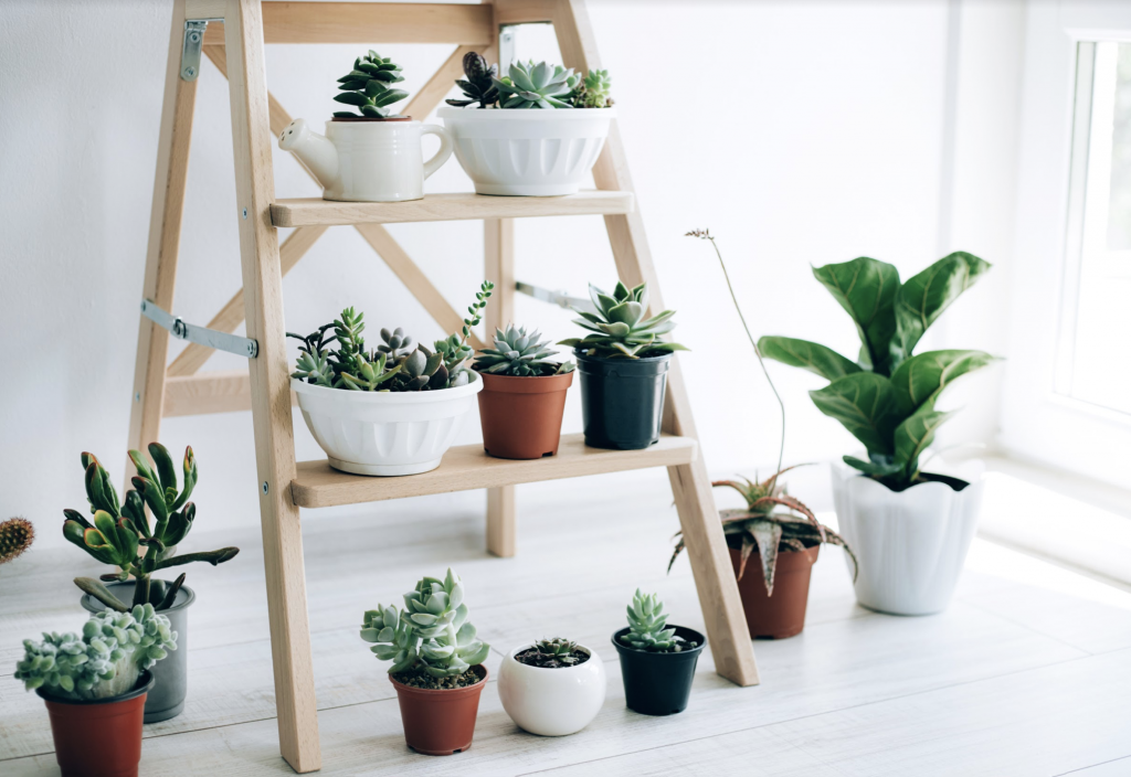 Plant ladder stand