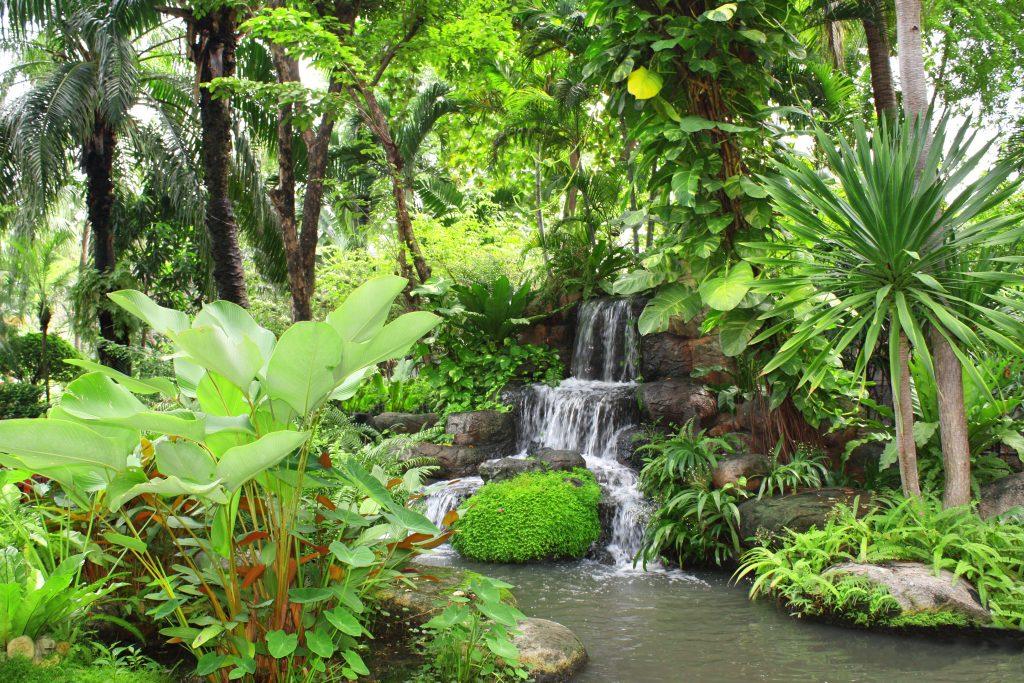 Waterfall in tropical garden