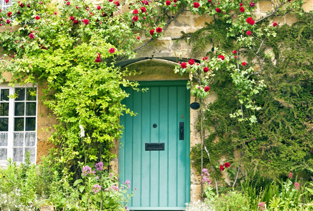 Green wooden doors in an old traditional English stone cottage house surrounded by climbing red roses and flowers