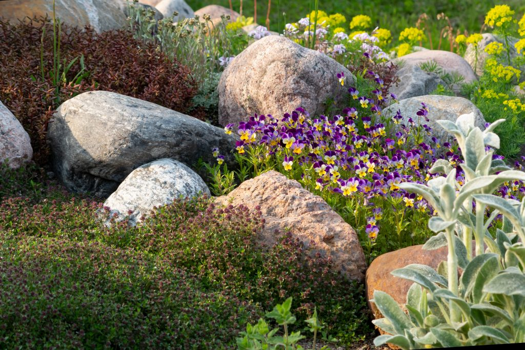 Blooming violets and other flowers in a small rockery in the summer garden