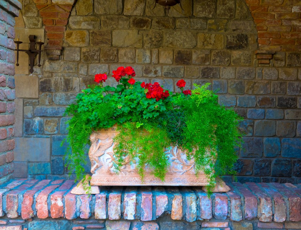Flowers in the old trough in front of a brick wall