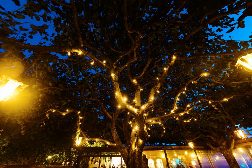 Decorative outdoor string lights hanging on tree in the garden at night time