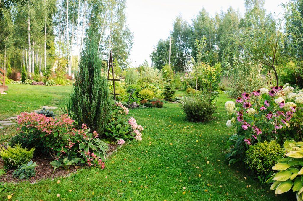 summer garden view with blooming perennials, Hydrangea paniculata, conifers, hostas. Cottage garden style