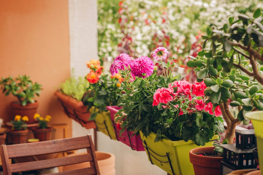 Colorful flowers growing in pots on the balcony