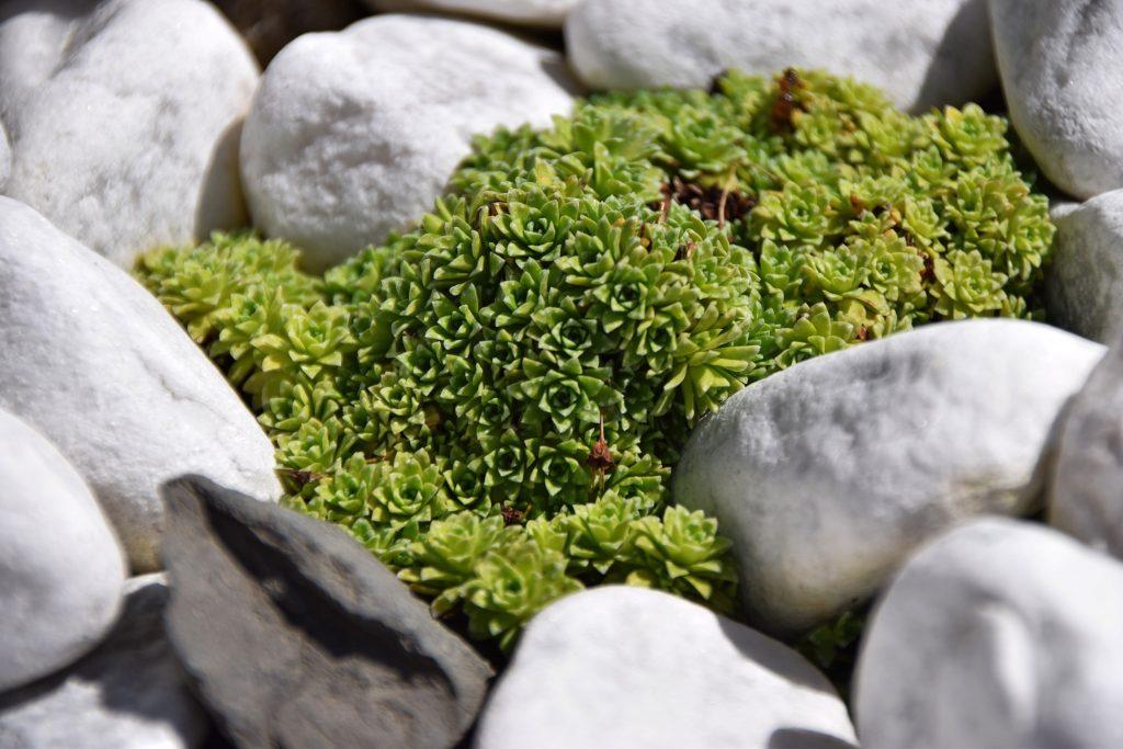 Mini-Steingarten