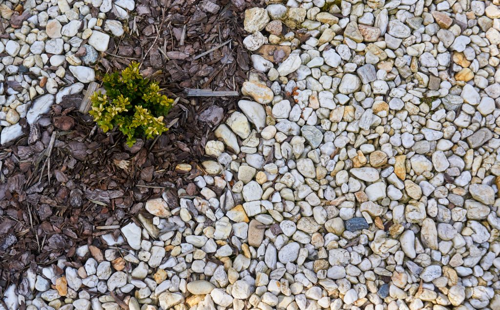 Single shrub surrounded by pebbles and paving stones