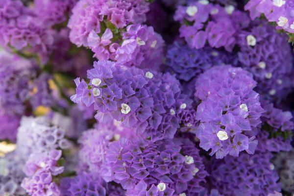 15 Christmas Plants That's Fabulous For Winter Indoor Garden