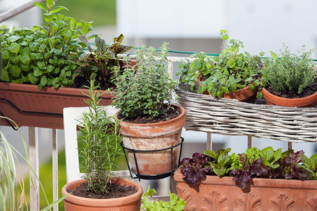 Enjoy the smells of herbs on your balcony