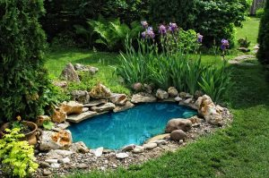 Great Ideas For Having A Backyard Pond At Home