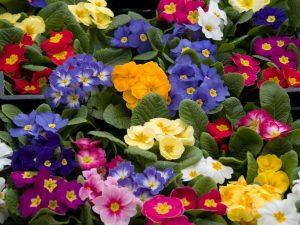 10 Spring Flowers For A Fresh & Lively Feel