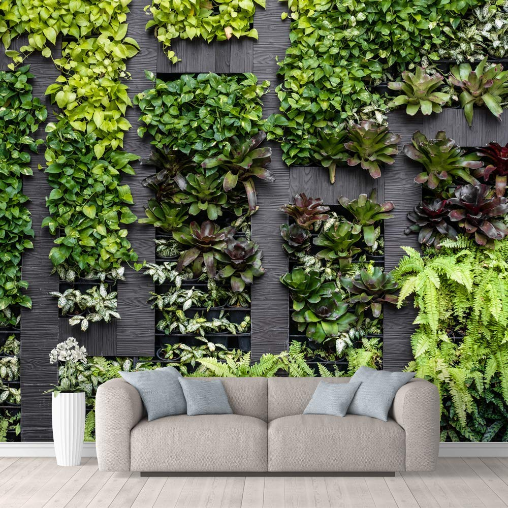 An Indoor Garden With Wallpaper