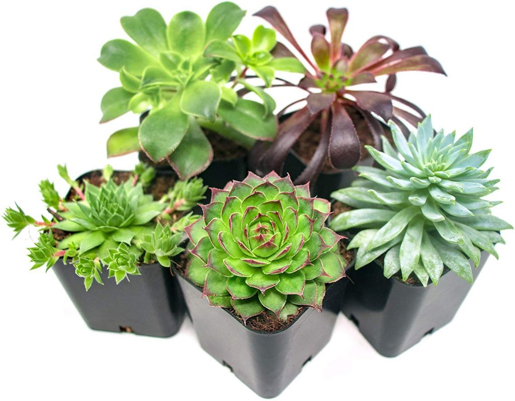 An Indoor Garden On A Table