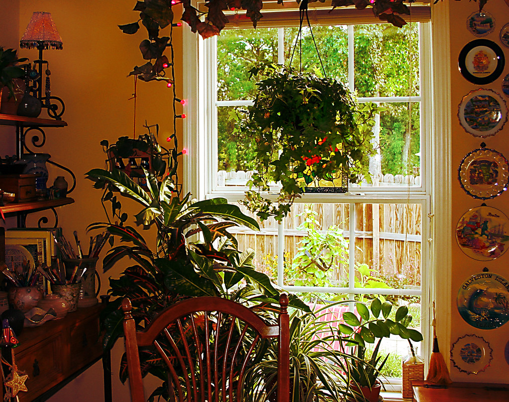 An Indoor Garden In The Kitchen