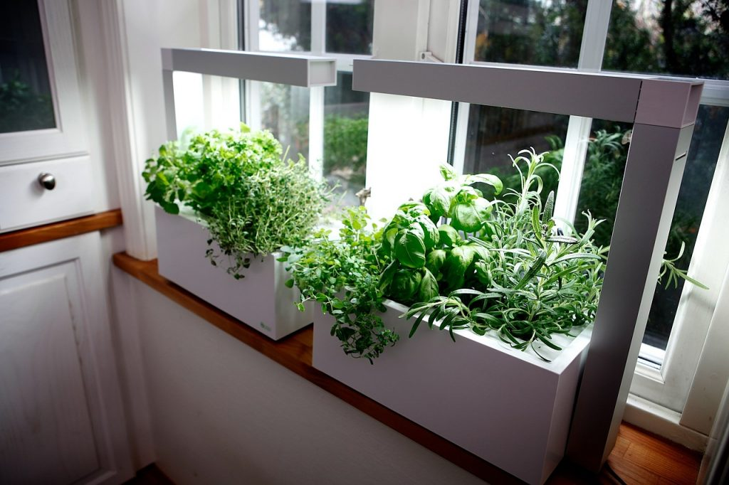 An Indoor Garden On A Windowsill