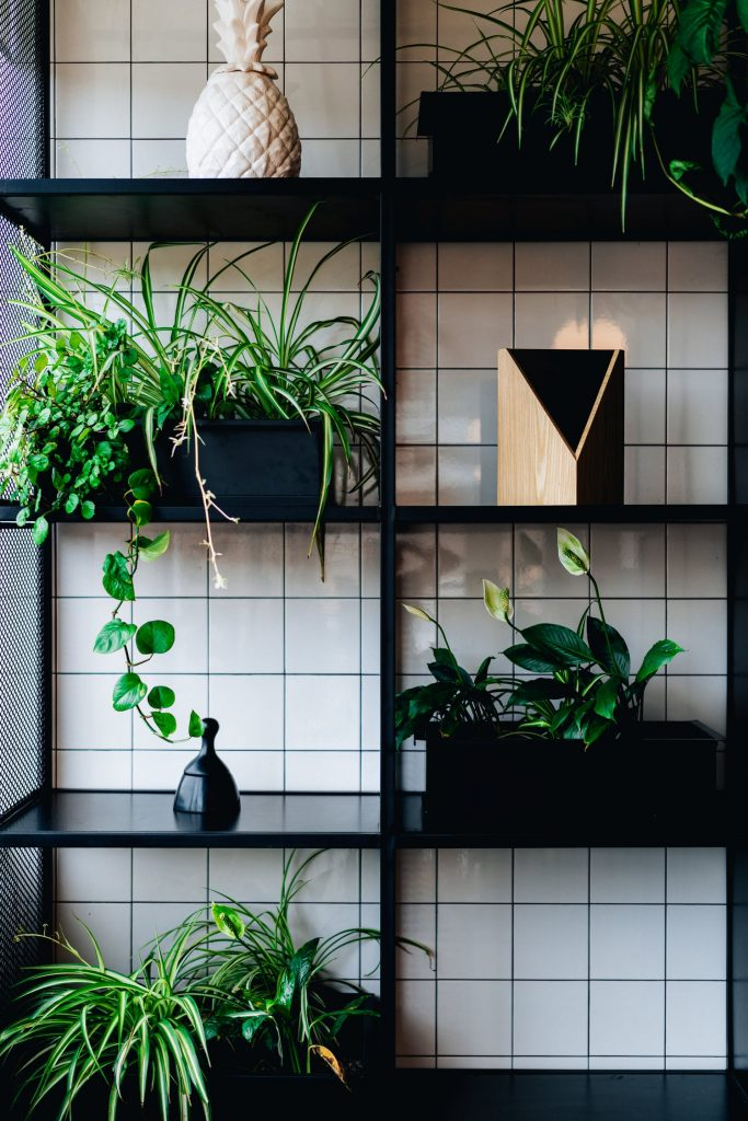 An Indoor Garden On Shelves