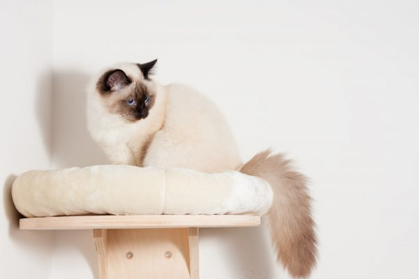 20 Best Cat Shelves For Your Feline Friend