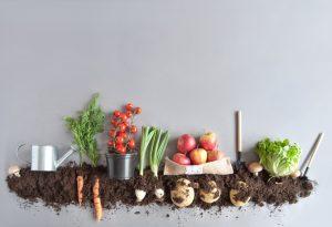50 Vegetable Garden Ideas For Delicious Meals