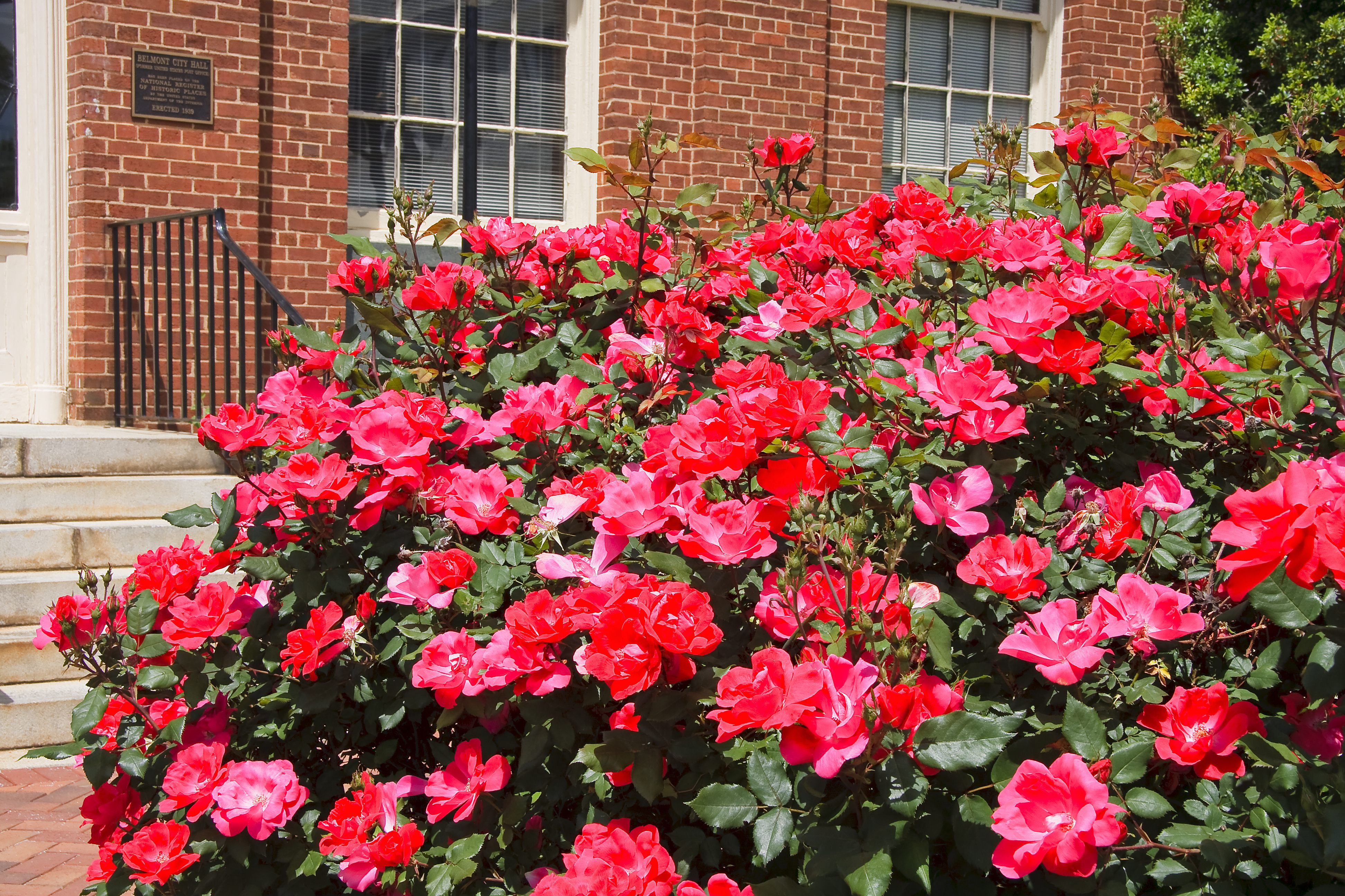 aromatherapy rose