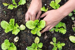30 Quick & Easy Edible Garden Ideas (Works 100%)
