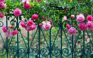 10 Climbing Roses For The Perfect Greek Garden