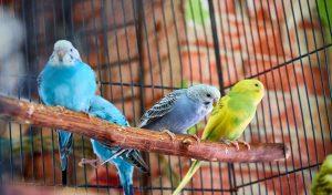 12 Best Bird Perch For Resting Tiny Feet
