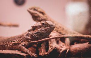 9 Most Durable & Spacious Reptile Enclosure
